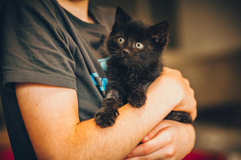 moti - MOTI, chaton noir, poils mi-longs, né le 15/08/16 Img_8416
