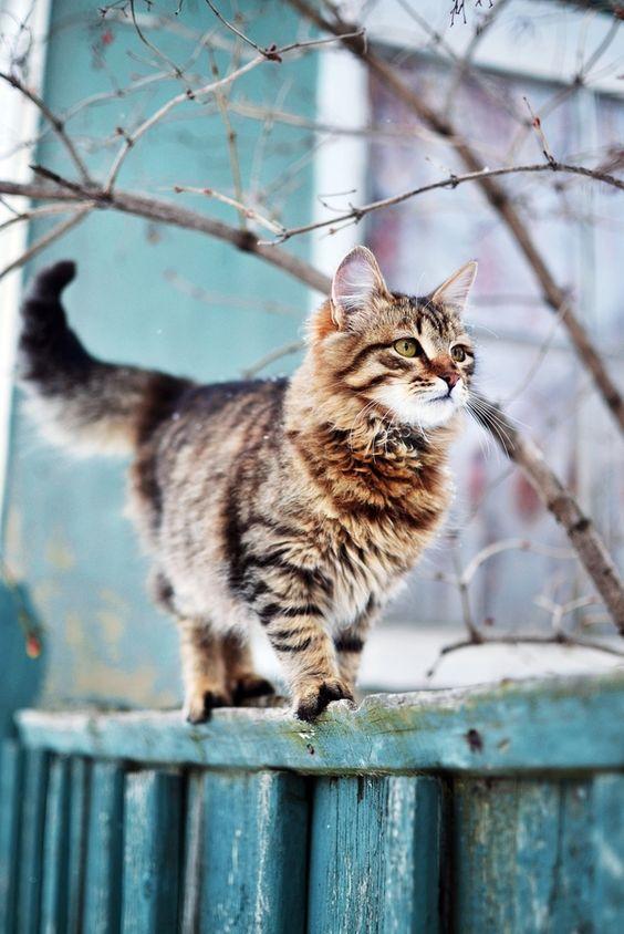 Images pour vos chats 00c14810