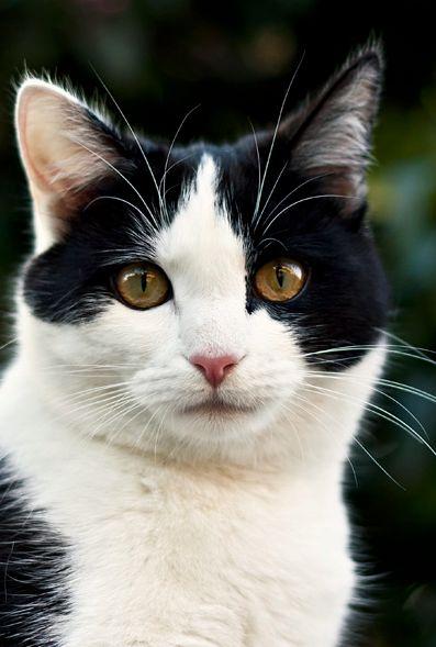 Images pour vos chats 0b692110