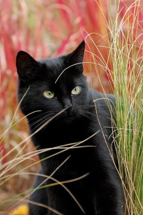 Images pour vos chats 139b9e10