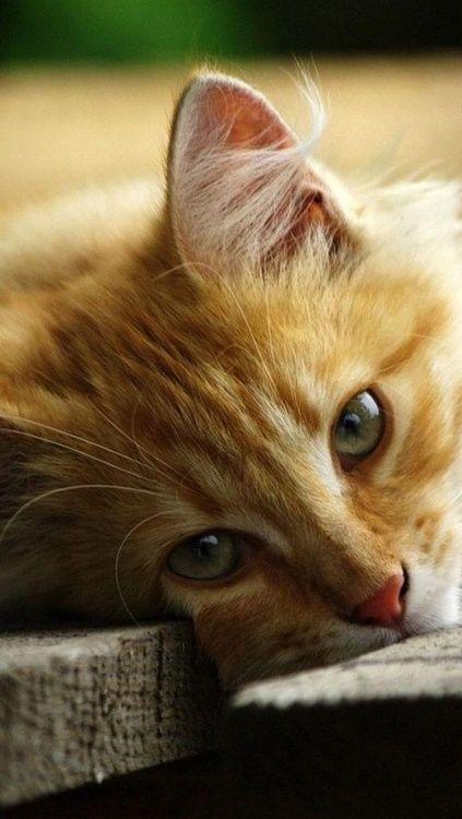 Images pour vos chats 167b9310