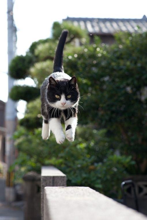 Images pour vos chats 17689210