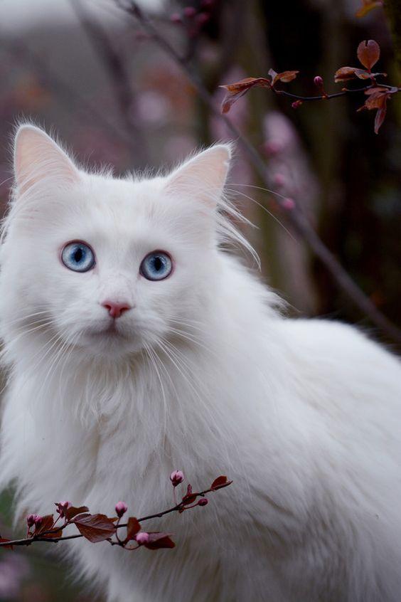 Images pour vos chats 23a32010