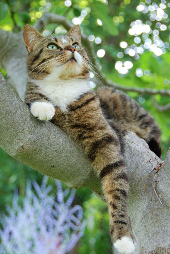Images pour vos chats 253f6510