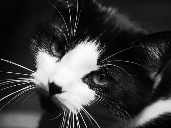 Images pour vos chats 26004f10