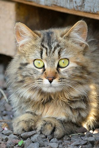 Images pour vos chats 2bb85b10