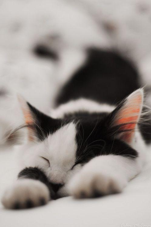 Images pour vos chats 314dc710