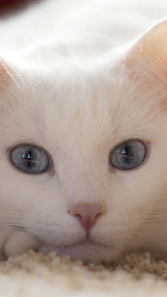 Images pour vos chats 31fd4710