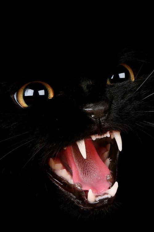 Images pour vos chats 35f07410