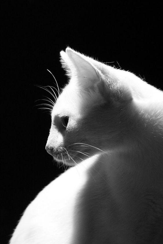 Images pour vos chats 376d4e10