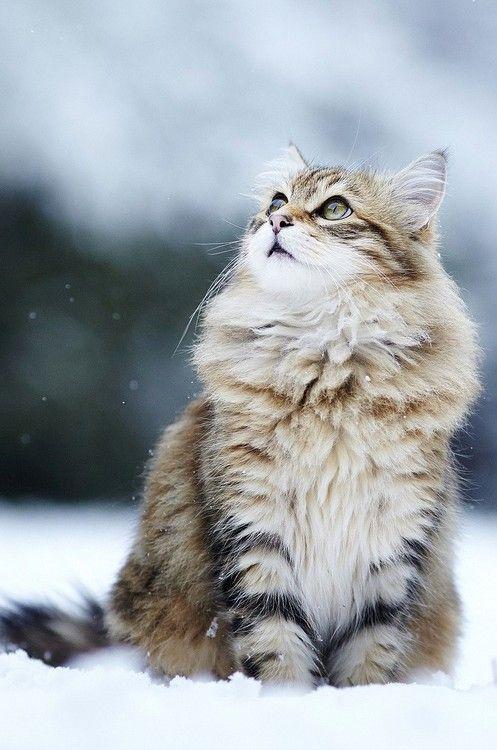 Images pour vos chats 476bc410
