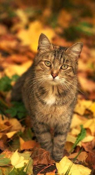 Images pour vos chats 482dfd10