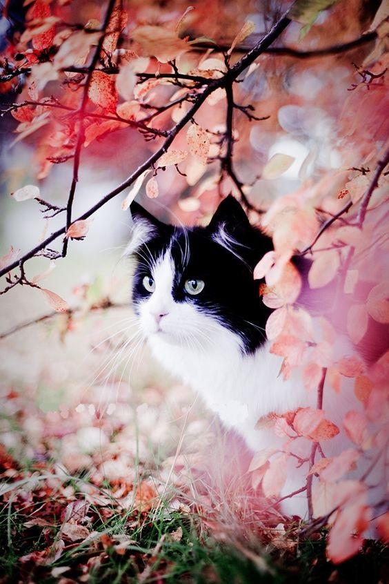 Images pour vos chats 4ca2c110