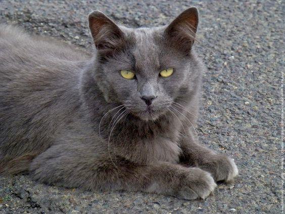 Images pour vos chats 5cf2c910