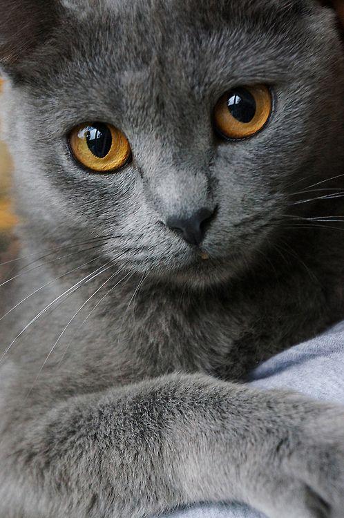 Images pour vos chats 60edce10