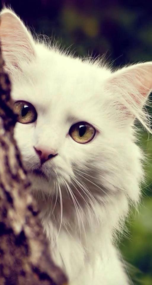 Images pour vos chats 658df010