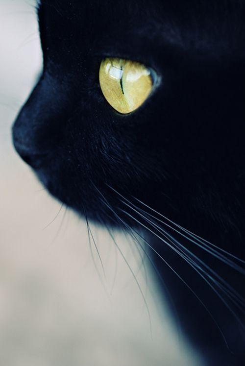 Images pour vos chats 6865ff10