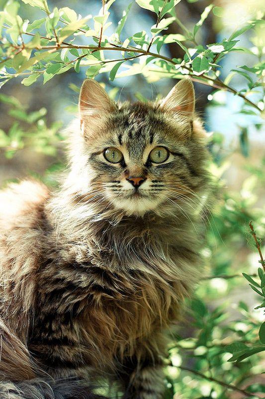 Images pour vos chats 6c5af110
