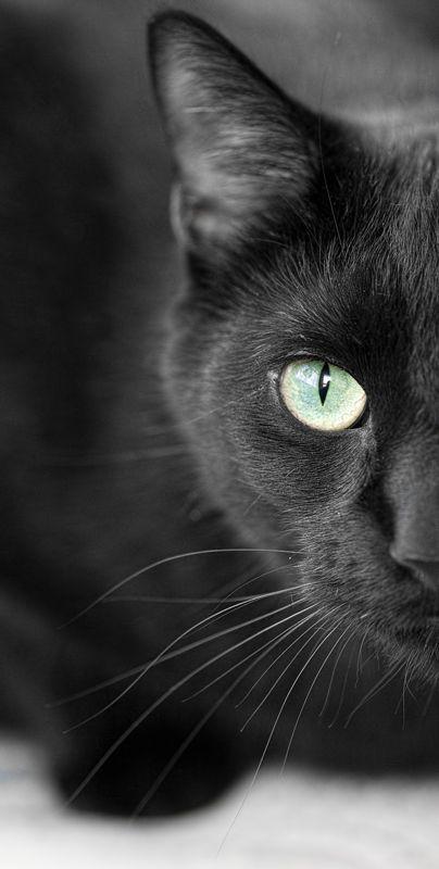 Images pour vos chats 73727810