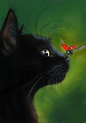 Images pour vos chats 7d2f3611