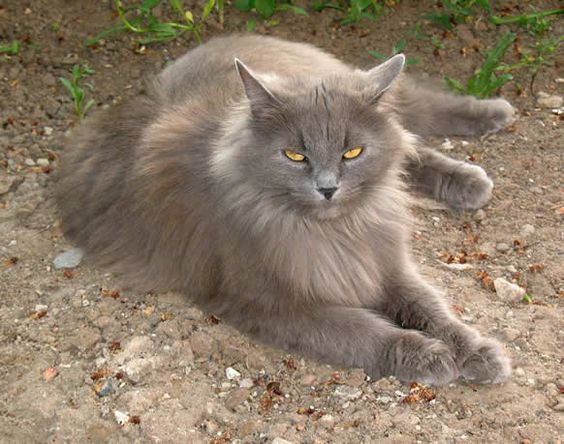 Images pour vos chats 7dd02910