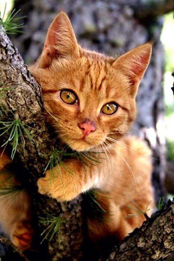 Images pour vos chats 7f177410
