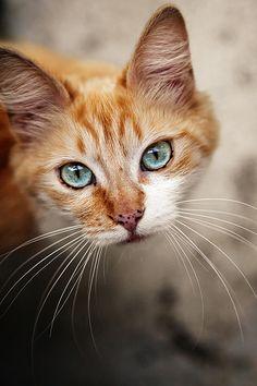 Images pour vos chats 8abadb10