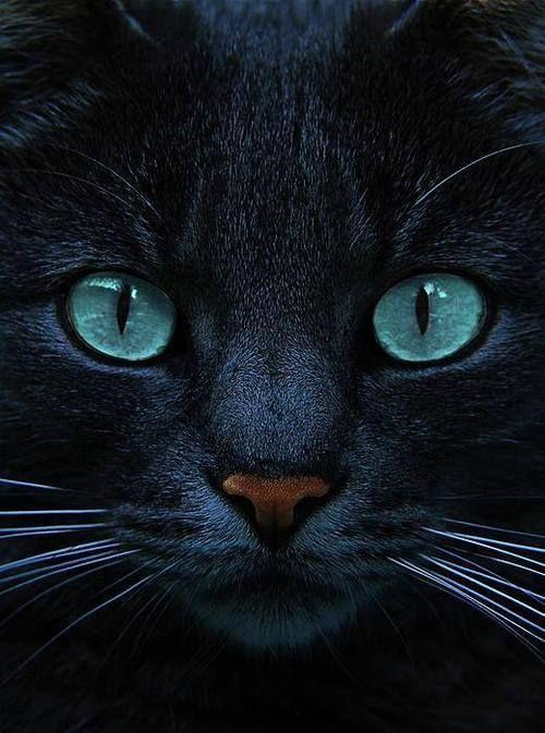 Images pour vos chats 8be8e210