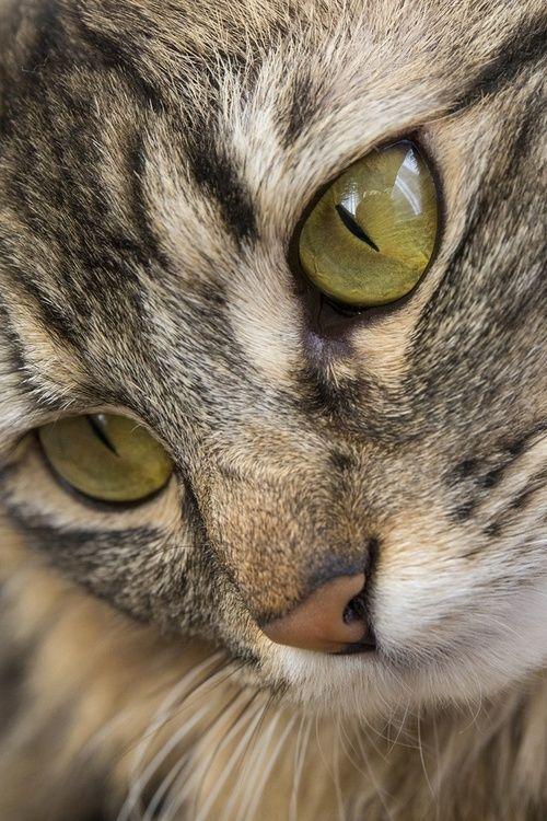Images pour vos chats 90083810