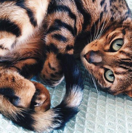 Images pour vos chats 93588a10