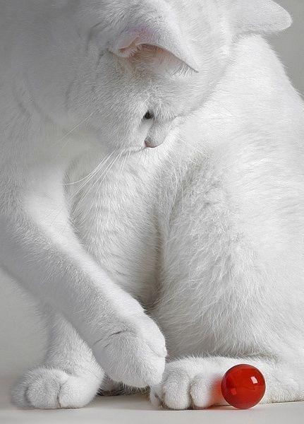 Images pour vos chats 97e32610
