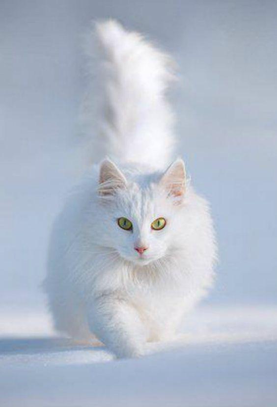 Images pour vos chats 9a6e7710