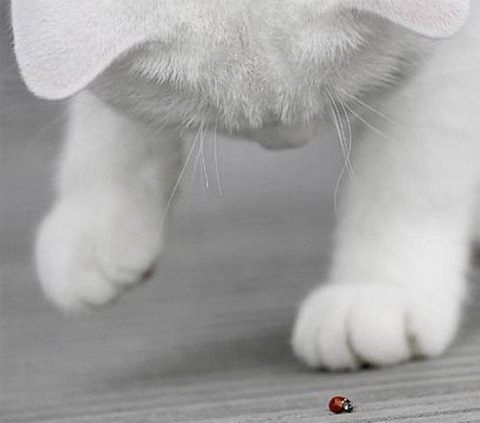 Images pour vos chats A82bf010