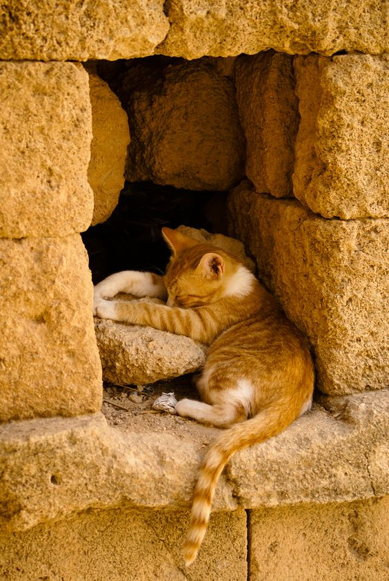 Images pour vos chats Aa019210