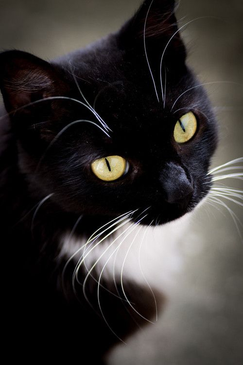 Images pour vos chats Aef83510