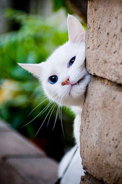 Images pour vos chats B17ea210