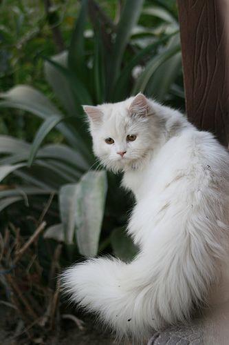 Images pour vos chats B719d110