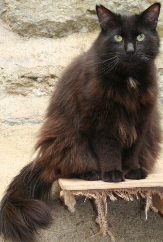Images pour vos chats Bb6e0d10