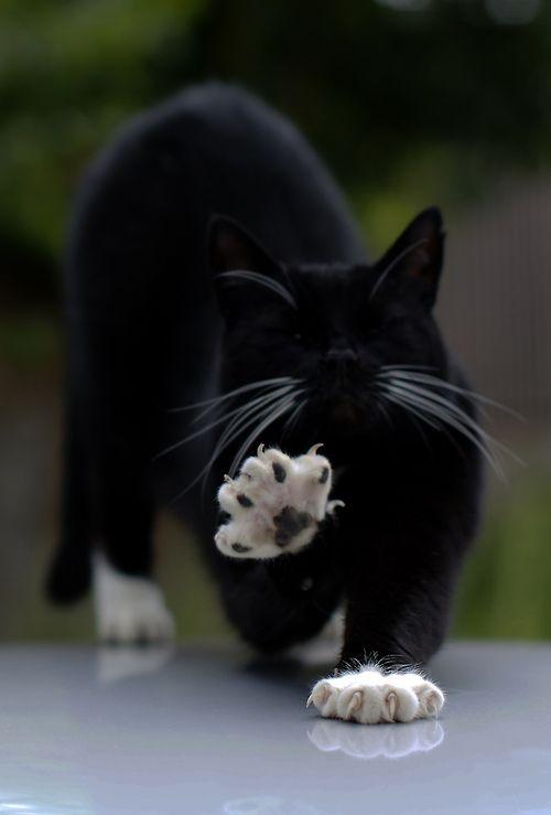 Images pour vos chats Bc0b8f10