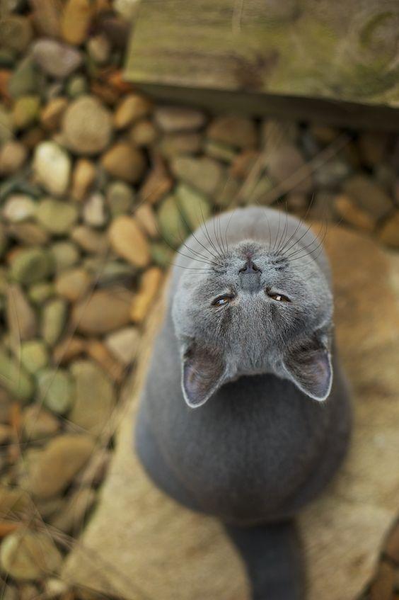 Images pour vos chats Bcb42510