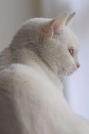 Images pour vos chats C065b610