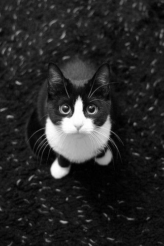 Images pour vos chats C1a1ea10