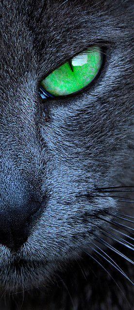 Images pour vos chats Ce0fab10