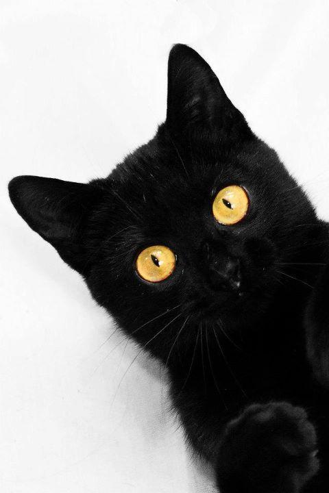 Images pour vos chats Cf812a10
