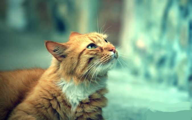 Images pour vos chats Chat-r10