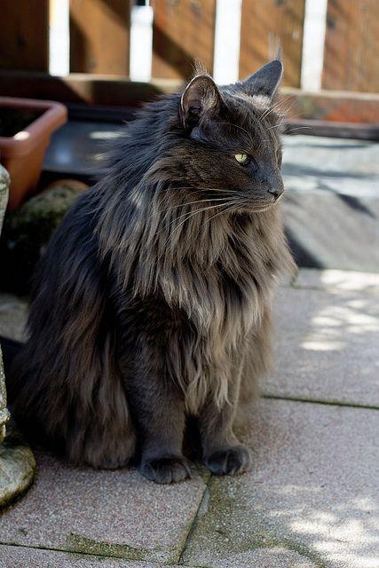 Images pour vos chats Ddfbf510