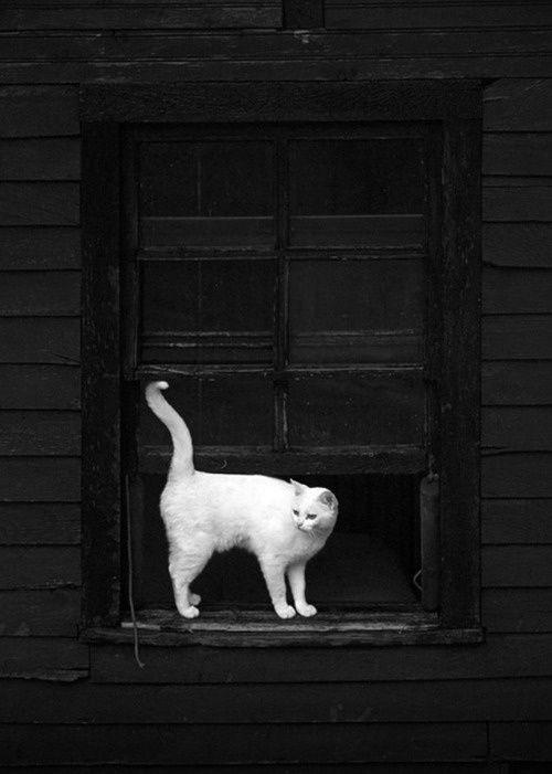 Images pour vos chats Df565d10