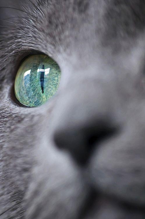 Images pour vos chats Df86d110