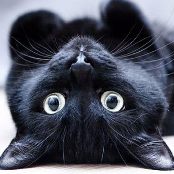Images pour vos chats E1b38a10