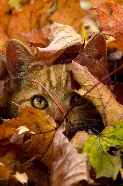 Images pour vos chats E1c9f110